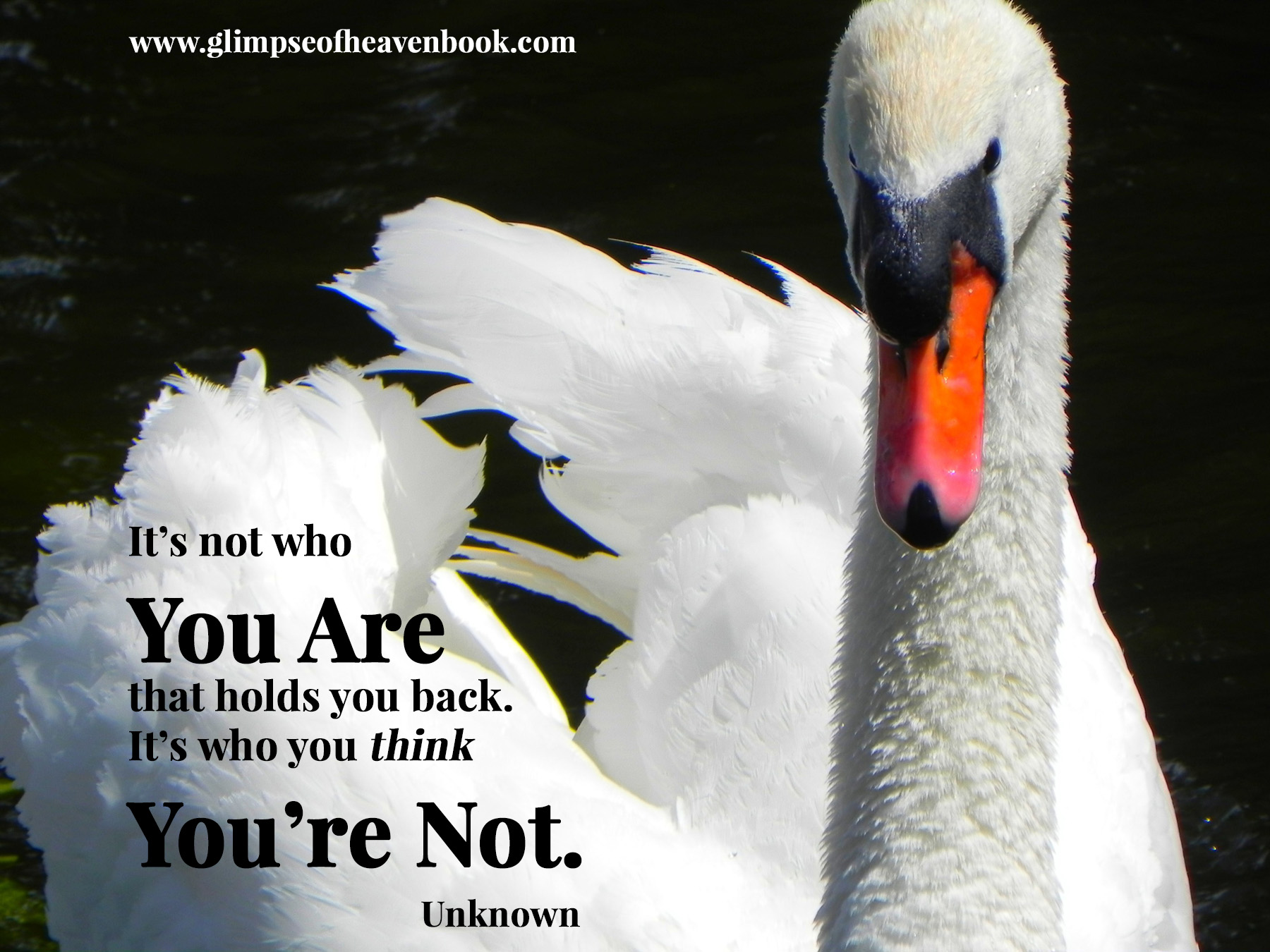 its-not-who-you-are-swan-18829